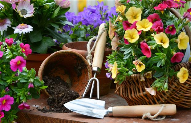 Round Rock Gardens Has Been Serving Central Texas Gardeners Since 2002.  Located In Historic Old Town Round Rock, The Garden Center Is Dedicated To  Native ...